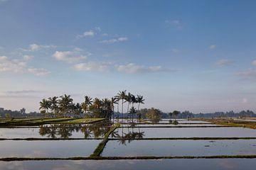 Reisfelder auf Bali. Bali ist bekannt für seine schönen und dramatischen Reisterrassen. von Tjeerd Kruse