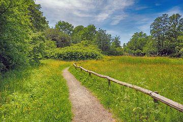 Im park spazieren gehen der natur von Ronald Smits