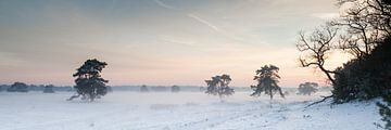 Winterschemering op de Hoge Veluwe van