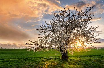 Cherrie Tree van Steffen Gierok