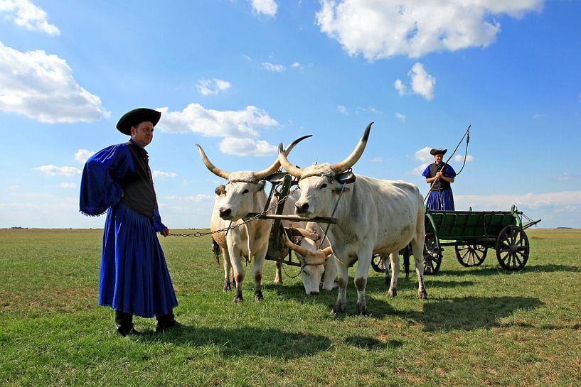 Traditionele ruiters op de poesta van Antwan Janssen