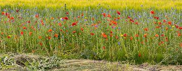 Mohnblumen und Kornblumen von Corrie Ruijer