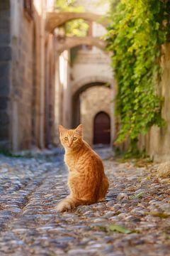 Katze in einer Strasse auf Rhodos Griechenland von Katho Menden