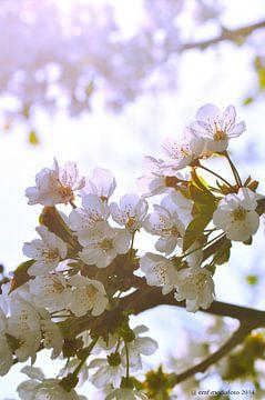 Appel Bloesem van Elly Michiels-Fleuren