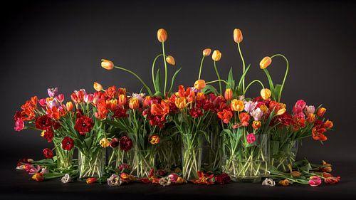 Tulipes des Pays-Bas