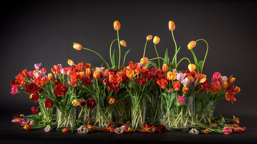 Tulipes des Pays-Bas sur Dirk Verwoerd