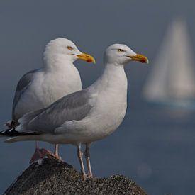 Sitting on the Dock of the Bay van Dick Vermeij
