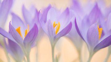 Frühling von Elles Rijsdijk