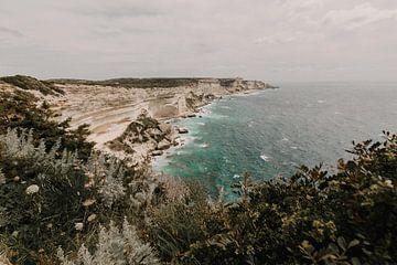 Botanische Küstenlinie von Voorbeeld Fotografie