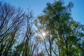 Bomen zonlicht von Jane Changart