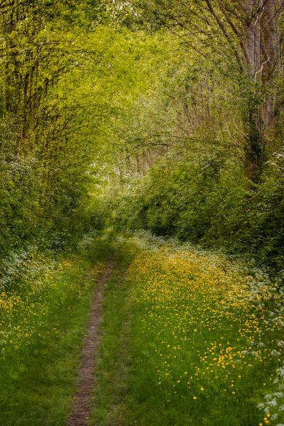 Chemin forestier au printemps | scène pittoresque sur Marjolijn Maljaars