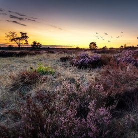 Purple sunset van Patrick Rodink