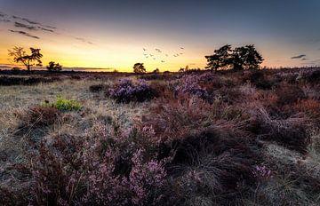 Purple sunset von Patrick Rodink