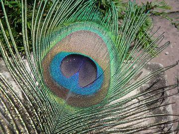 Pauwenveer von Pieter Korstanje