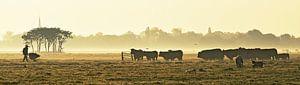 De koeien wachten al