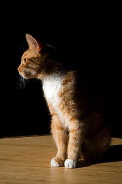 Rembrandt Katze von Greetje Heemskerk