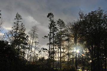 landschap von John Schouwink