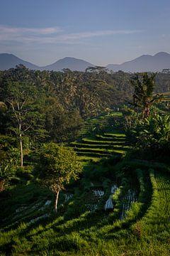 Reisterrasse in Ubud, Bali von Ellis Peeters