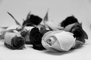 verschillende rozenkoppen zwart wit