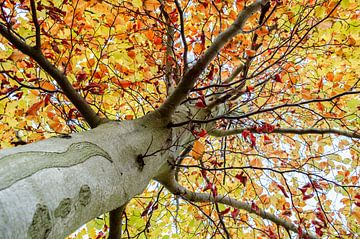 Boom in herfstkleuren von Dennis  Georgiev