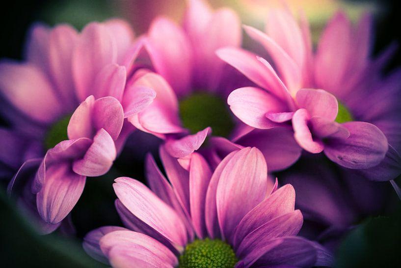 bloemen van Kristof Ven
