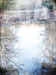 Bos weerspiegeling 5