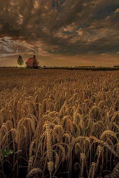 Getreidefeld von Andy Luberti