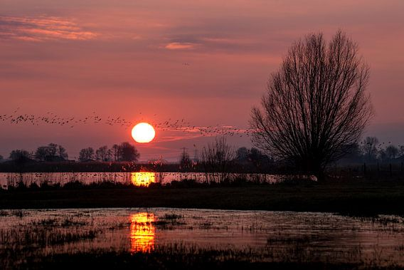 Jutjesriet bij zonsondergang van Erik Veldkamp