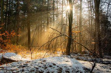 Wintertafereel von Arjen Uijttenboogaart