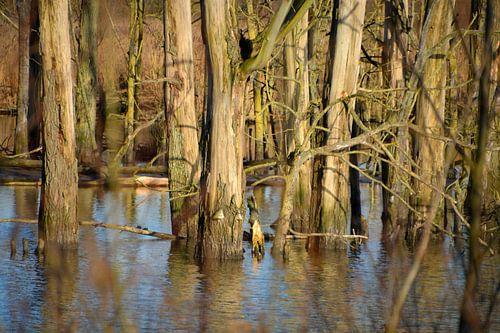 Boomstammen in het water in de Biesbosch