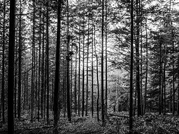 Gerade Bäume im Wald schwarz-weiß von Charlotte Dirkse