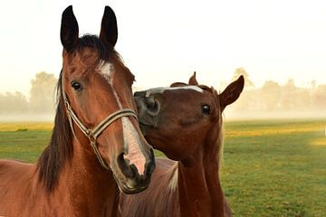 Pferdekuss von Ulrike Leone