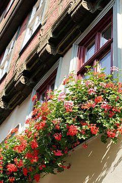 Blumen als Dekoration an einem historischen Fachwerkhaus von Heiko Kueverling