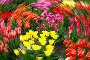 Tulip extravaganza van
