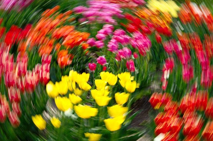Tulip extravaganza van Mike Bing