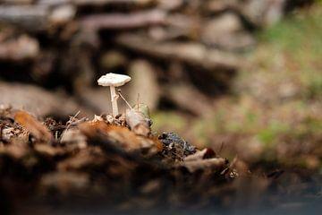 Pilz von Els Hattink