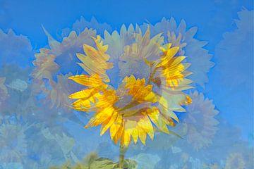 Sonnenblumen, Sonnenblume,  abstrakt,  (Helianthus annuus)