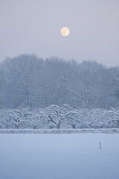 Landgoed Amelisweerd in de winter van Merijn van der Vliet