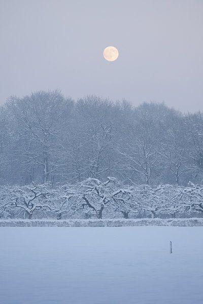 Landgoed Amelisweerd in de winter