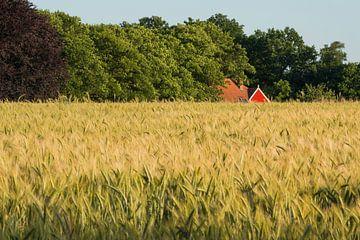 Roggeveld in de Achterhoek in Nederland van Tonko Oosterink