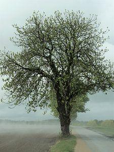 2. Mysterieuze boom na een regenbui.