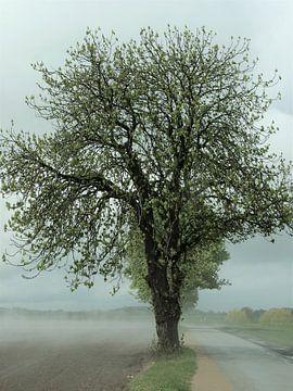2. Mysterieuze boom na een regenbui. van