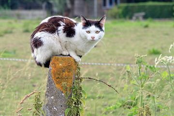 Zwart witte kat op een paal sur