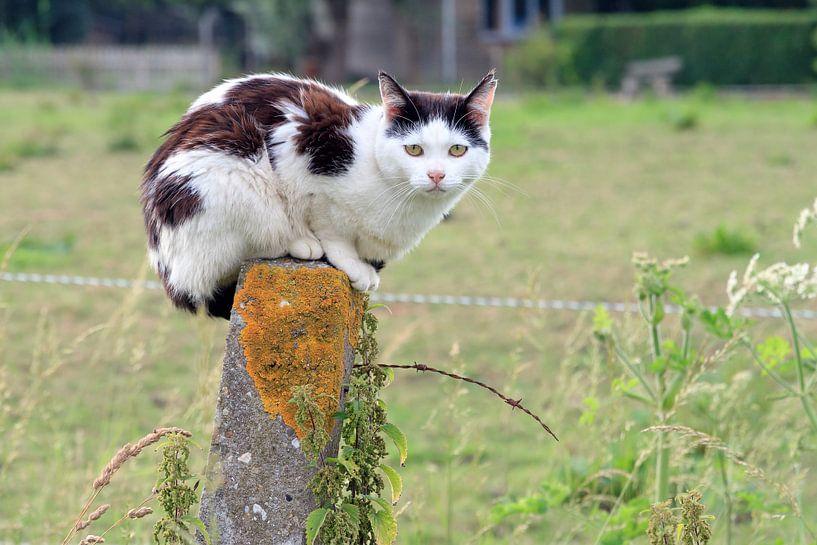 Zwart witte kat op een paal van Dennis van de Water