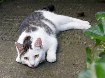 Kat op grafsteen van Edwin Butter
