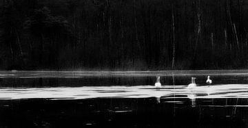 Goose Lake I von Cor Ritmeester