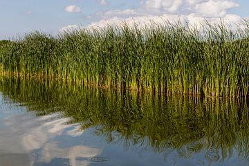 Varend door het Wormer en Jisperveld is het genieten van de mix van water, land en lucht van Studio de Waay