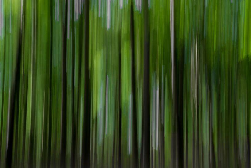 Forest movement van Eliberto