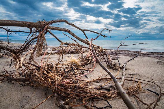 Baumstamm an der Ostseeküste bei Meschendorf