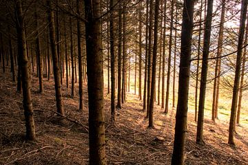 Zonlicht door de bomen van Thirza Sprong